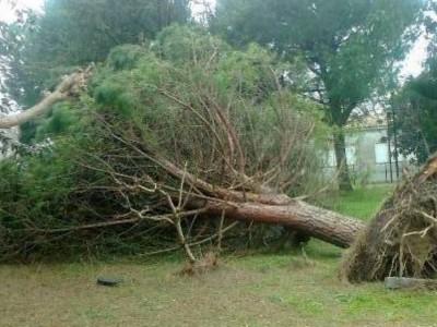 Italia Nostra Onlus Marche: 'Basta abbattere alberi!'