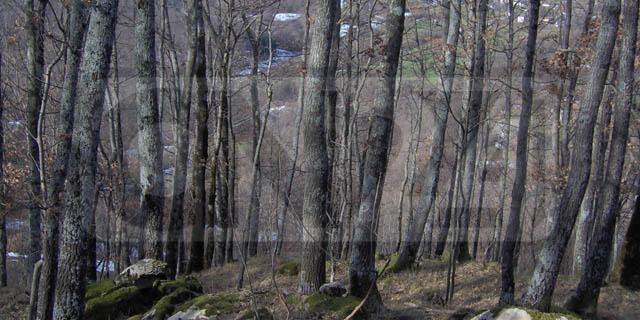 Agronomi e Forestali in Regione: tutela boschi, individuate priorità di intervento
