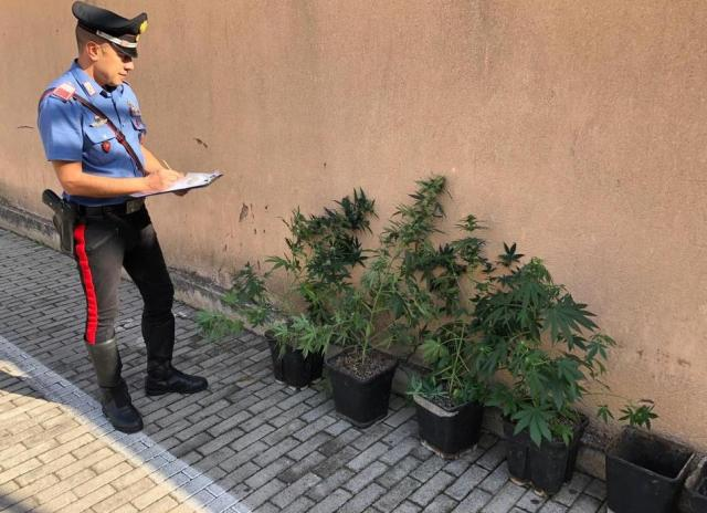 Palermo, da garage a piantagione di marijuana: arrestato 42enne incensurato