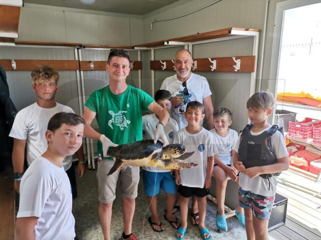 Animali, Club Velico Crotone salva tartaruga al largo della costa